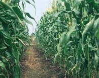 slider_dont_take_herbicide_resistance_lightly_728x290-516x290