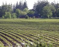 13CL6717_crops