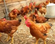 rural-poultry-farming1