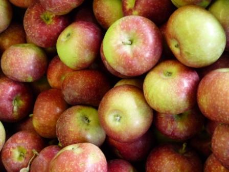Apples Aug 2010 032