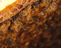 Bees-in-a-honeycomb