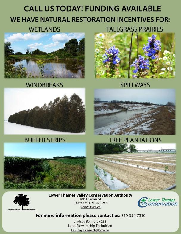 Greening Partnership pg8