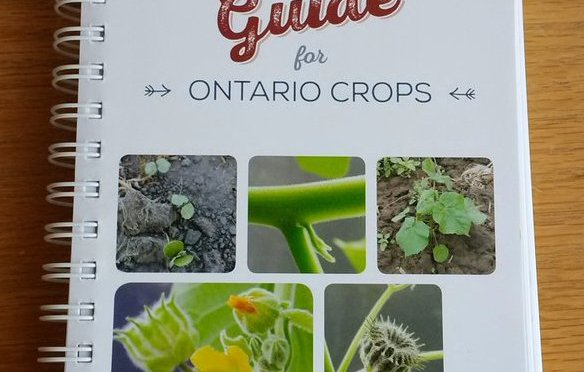 ontario_weed_id_cover_2-1 (1)
