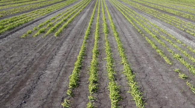 seeded-onion-field-13-e1491228320767