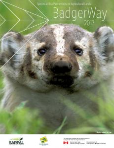 BadgerWay-cover-231x300