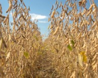 10_agronomics_-_share_your_yields_blog_post
