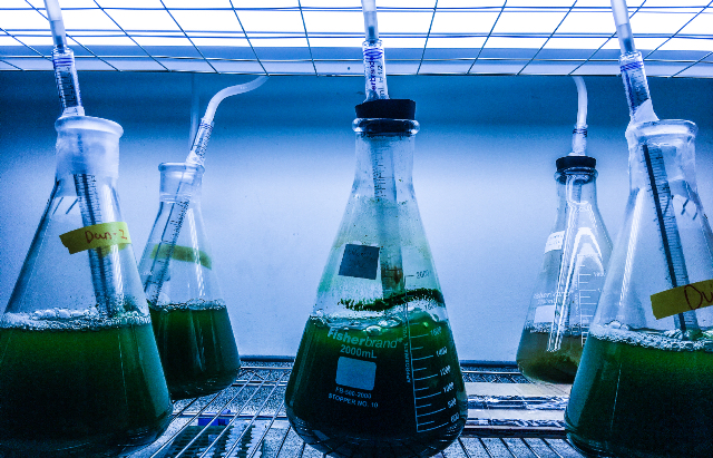 Micro-algae-growing-in-the-lab-web (2)